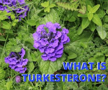 Turkesterone Australia – What Is Turkesterone & Is It Safe?